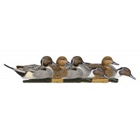 Topflight Pintails