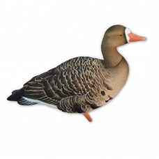 Avian-X Specklebelly goose decoys – Fully flocked