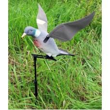 Rapid Flyer Pigeon